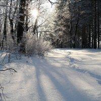 У нас обычно в январе хватает снега на дворе.. :: Андрей Заломленков