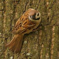 Нааааш птиц :: kolyeretka