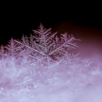 Снежинка макро :: Александр Синдерёв