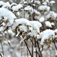 И вновь зима вернулась. :: Михаил Столяров