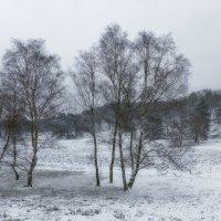 Зимний сон вересковой долины :: Nina Yudicheva