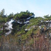 Январские картинки Балтийского побережья :: Маргарита Батырева