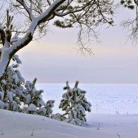 Зимний сон :: Marina Pavlova