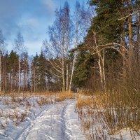 Зима все таки пришла :: Андрей Дворников