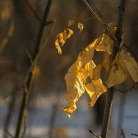 золотое на белом... :: Екатерина Агаркова