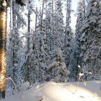 мороз и солнце день отличный :: Евгения Шикалова