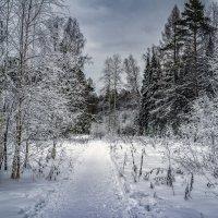 Зимняя сказка :: Pavel Kravchenko