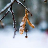 one in snow :: Евгений Балакин