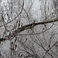 зима пришла :: Mari-Bly