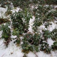 В зимней лесу :: BoxerMak Mak