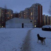 Мой вечерний моцион (но не только мой) :: Андрей Лукьянов