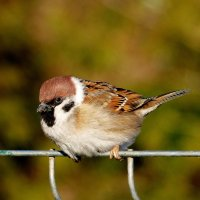 зимние птички 4 :: Александр Прокудин