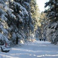 В лесу :: Mariya laimite
