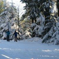 На лыжах... :: Mariya laimite