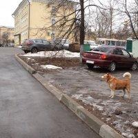 Взял под охрану :: Владимир Болдырев