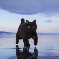 Тихон гуляет по Байкальскому льду :: василиса косовская
