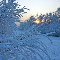 Мороз давит... :: Екатерина Торганская