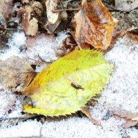 сон опавшей листвы :: Maryana Petrova