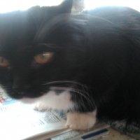 Моя кошечка Глаша. (Домашняя любимица). :: Светлана Калмыкова