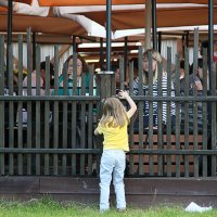 что делают взрослые за забором :: Олег Лукьянов