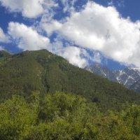 Лесная гора :: M Marikfoto