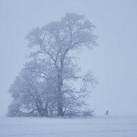 Туман :: Седа Ковтун