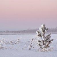 Утро туманное, утро морозное. :: Михаил Полыгалов