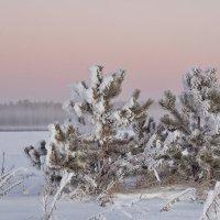 Утро туманное, сёстры - сосёночки. :: Михаил Полыгалов