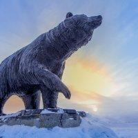 Медведь :: Андрей Кузнецов