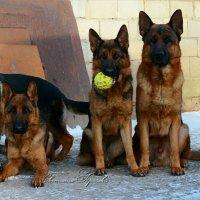 Моя любимая банда немецкая.... :: Светлана Горячева