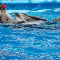 танец дельфинов :: Елена Кордумова