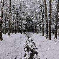 зимой в парке :: Светлана ***
