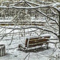 Зимним днём в парке. :: Василий Ярославцев