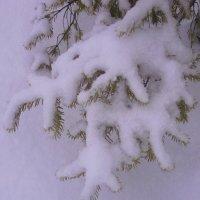 Снежные лапки :: Елена Семигина