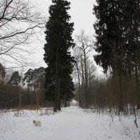 Парк научного городка им. академика И.П. Павлова :: Елена Павлова (Смолова)