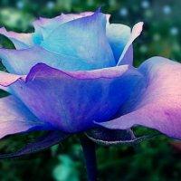 Голубой хрусталь. :: Farin Алёна