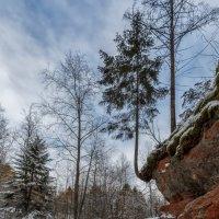 Про лес... :: Владимир Колесников
