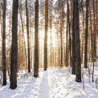 Мороз и солнце :: Татьяна Шторм