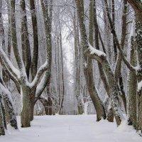 В тиши аллей. :: Нина Бурченкова.