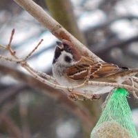 у шарика :: linnud