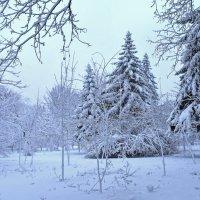 Крещенский снегопад :: Nina Streapan