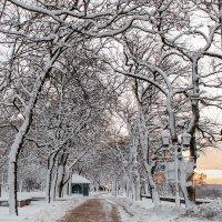Зимнее утро в Чернигове :: Сергей Тарабара