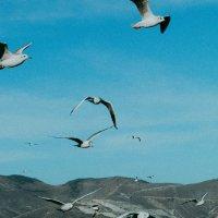 Немного птичек :: Виктория Коломиец
