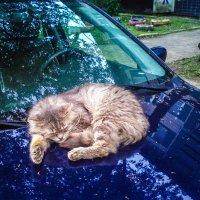 Даже котам приятно иметь свой автомобиль! :: Александр Куканов (Лотошинский)