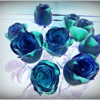 Зимние розы :: Надежда
