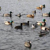 Замёрзло не всё озеро... :: Маргарита Батырева