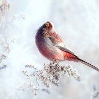 Зарисовки из зимнего луга :: Влад