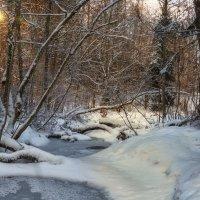 В зимнем лесу :: Владимир Колесников