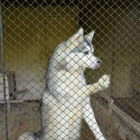 выставка собак :: Ольга Беляева