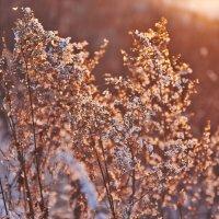 в лучах закатного солнца :: Седа Ковтун